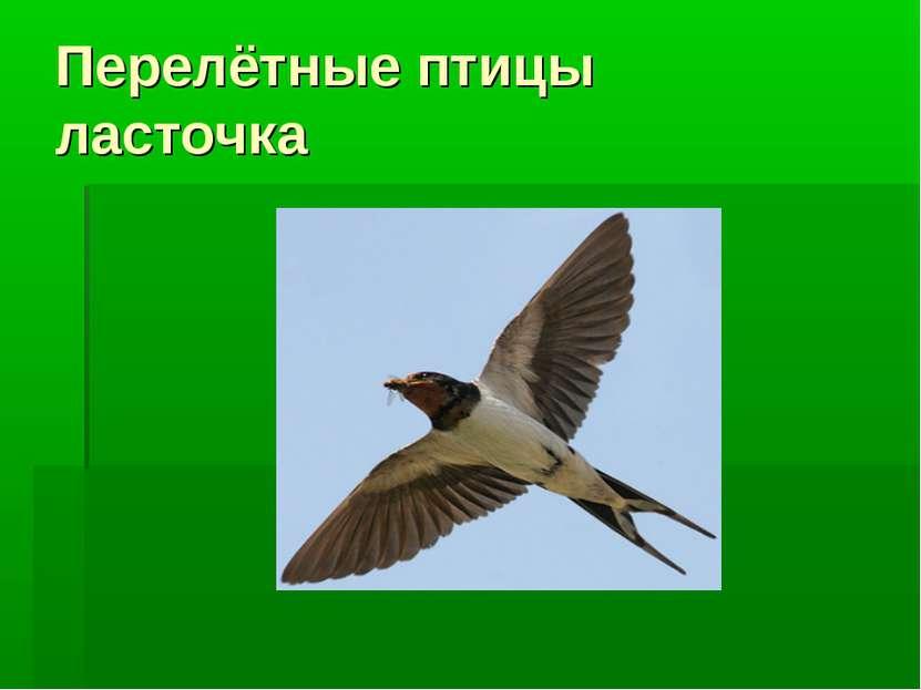 Перелётные птицы ласточка