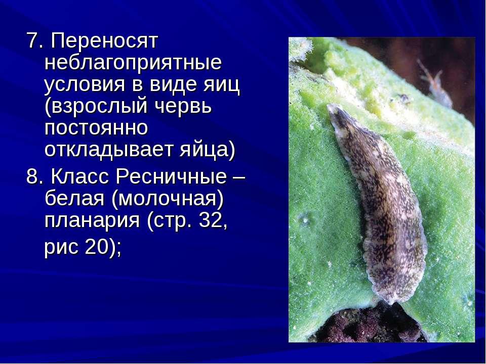 7. Переносят неблагоприятные условия в виде яиц (взрослый червь постоянно отк...
