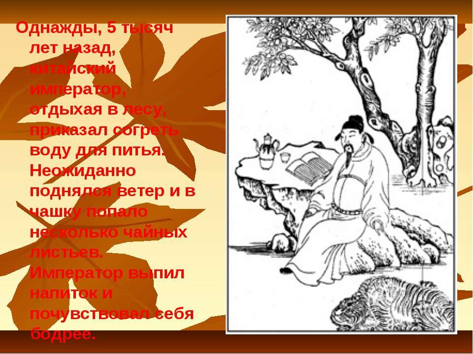 Однажды, 5 тысяч лет назад, китайский император, отдыхая в лесу, приказал сог...