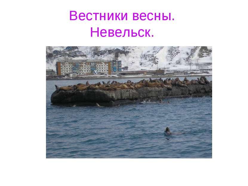 Вестники весны. Невельск.