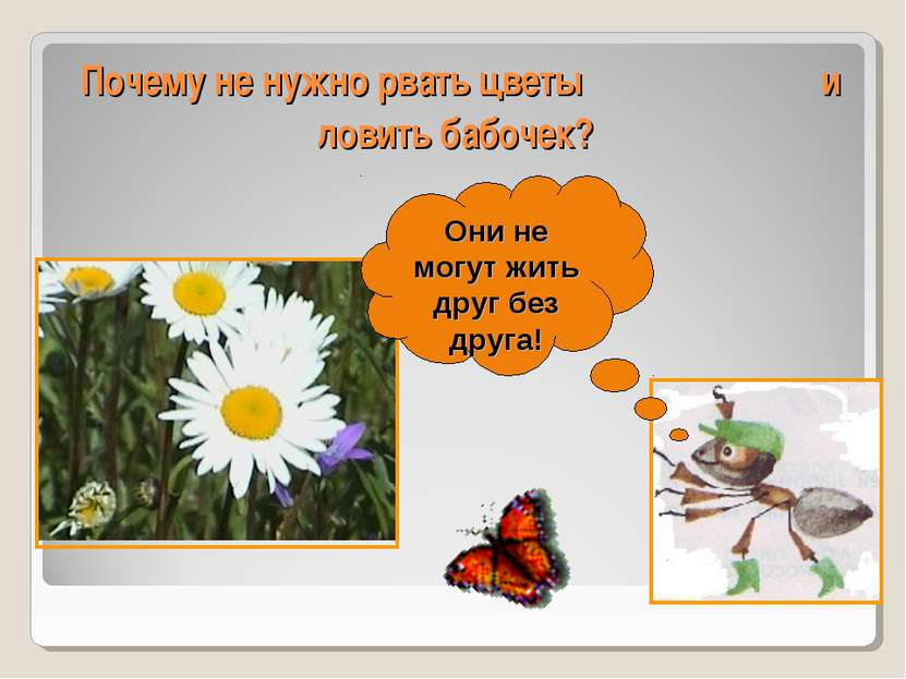 Почему не нужно рвать цветы и ловить бабочек? Они не могут жить друг без друга!