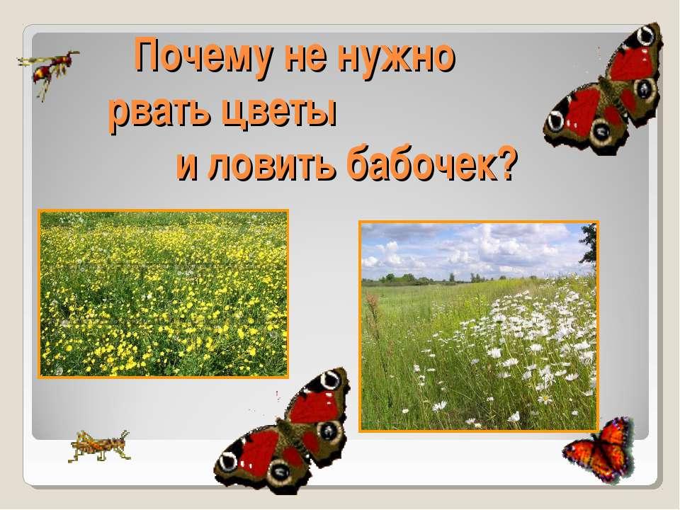 Почему не нужно рвать цветы и ловить бабочек?