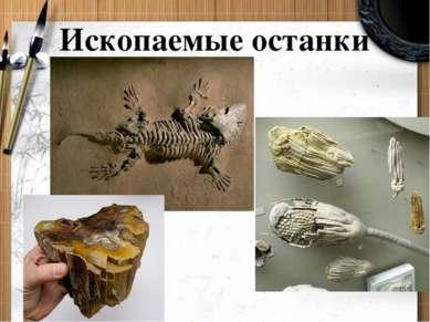 Ископаемые останки