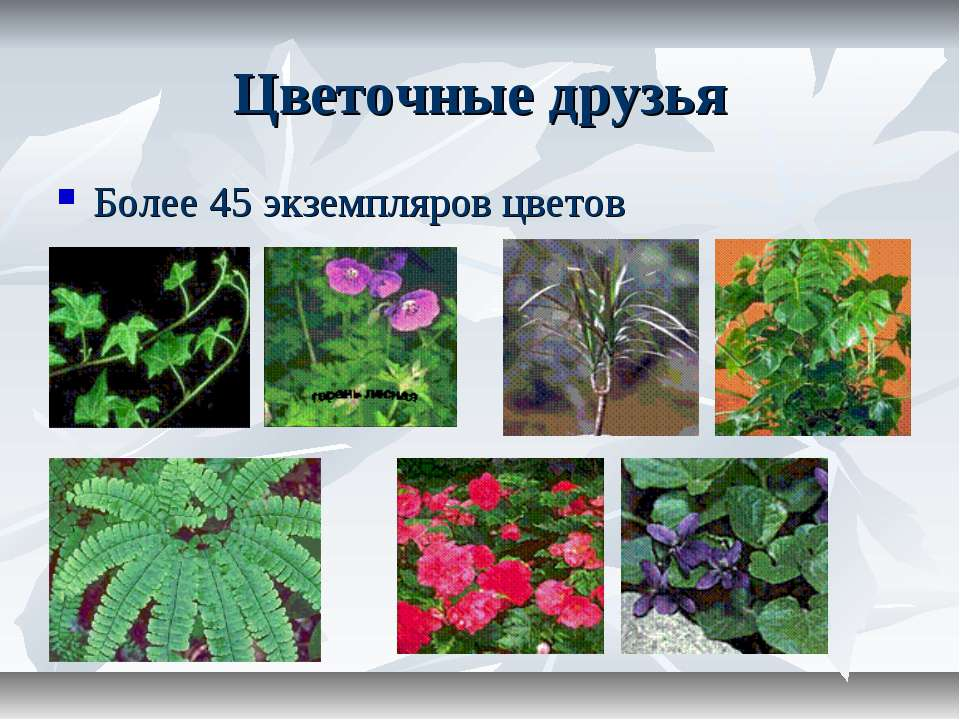 Цветочные друзья Более 45 экземпляров цветов