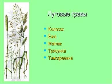 Луговые травы Колосок Ёжа Мятлик Трясунка Тимофеевка
