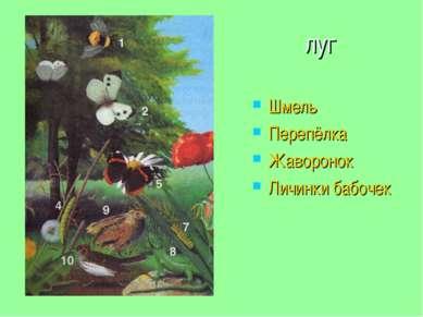 луг Шмель Перепёлка Жаворонок Личинки бабочек