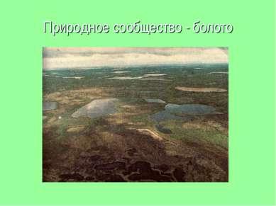 Природное сообщество - болото