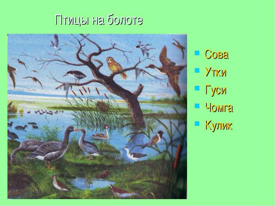 Птицы на болоте Сова Утки Гуси Чомга Кулик