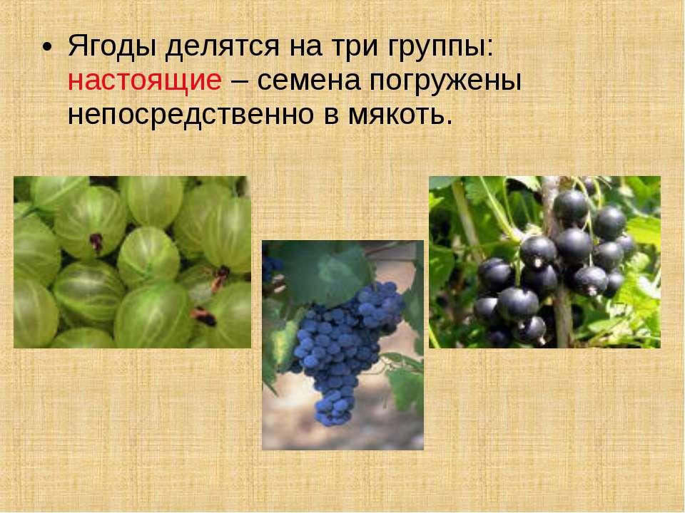 Ягоды делятся на три группы: настоящие – семена погружены непосредственно в м...