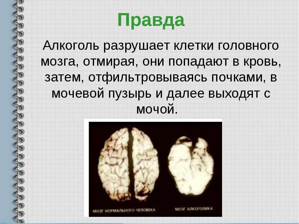 Правда Алкоголь разрушает клетки головного мозга, отмирая, они попадают в кро...
