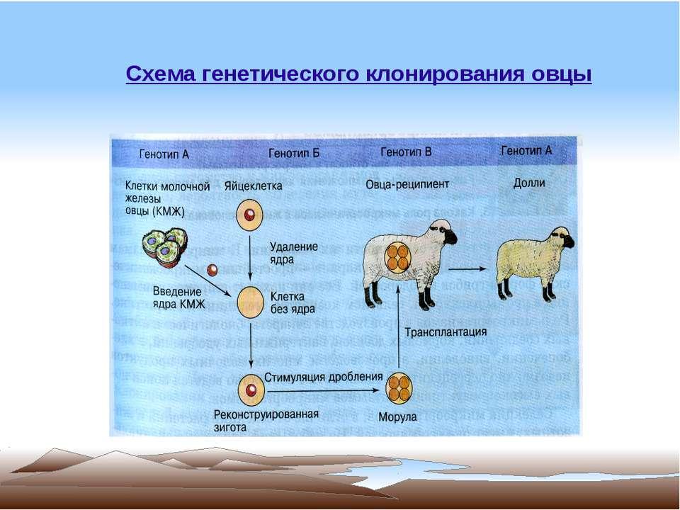 Схема генетического
