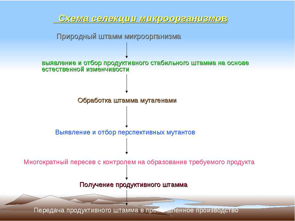 Схема селекции микроорганизмов
