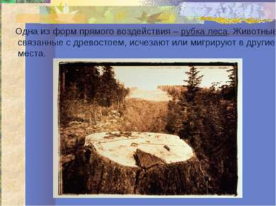 Одна из форм прямого воздействия – рубка леса. Животные, связанные с древосто...