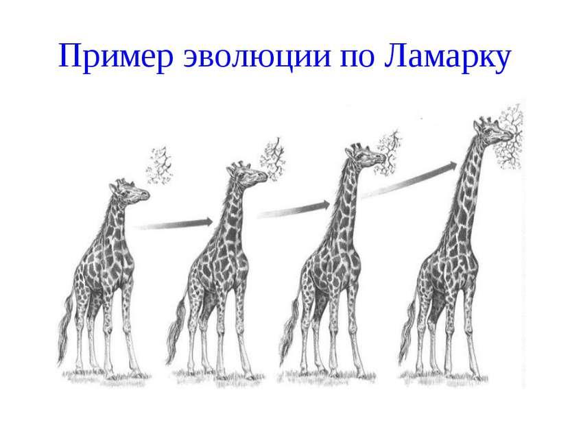 Пример эволюции по Ламарку