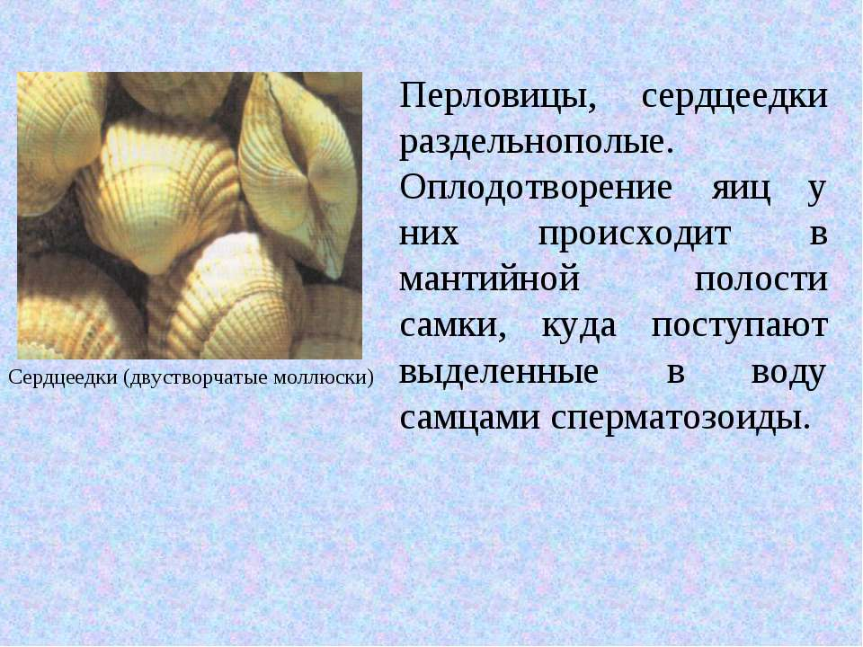 Перловицы, сердцеедки раздельнополые. Оплодотворение яиц у них происходит в м...