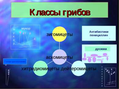 Классы грибов мукор мукор дрожжи го Голая цитоплазма пеницелли Антибиотики пе...