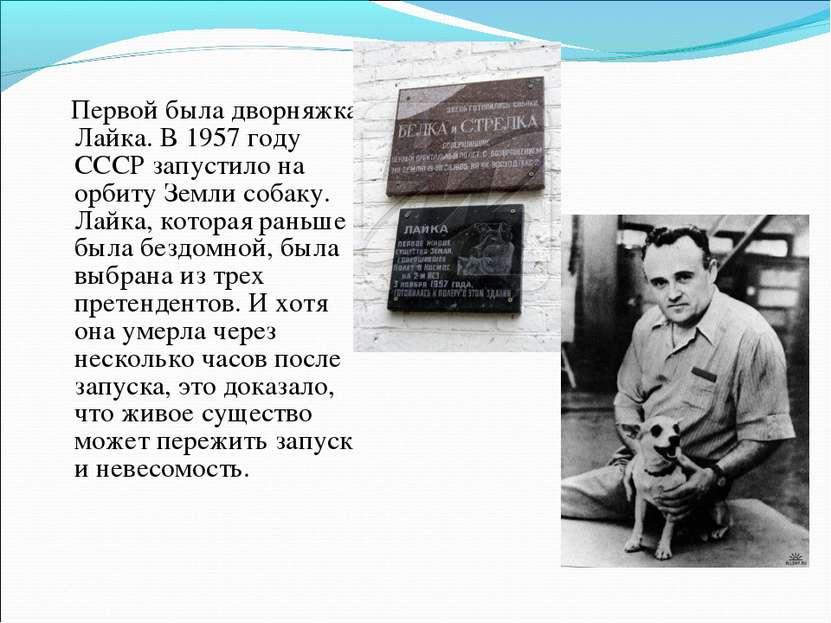 Первой была дворняжка Лайка. В 1957 году СССР запустило на орбиту Земли собак...