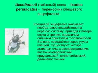 Иксодовый (таёжный) клещ – Ixodes persulcatus - переносчик клещевого энцефали...