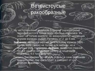 Ветвистоусые ракообразные Их часто называют водяным блохами- скачкообразно пе...