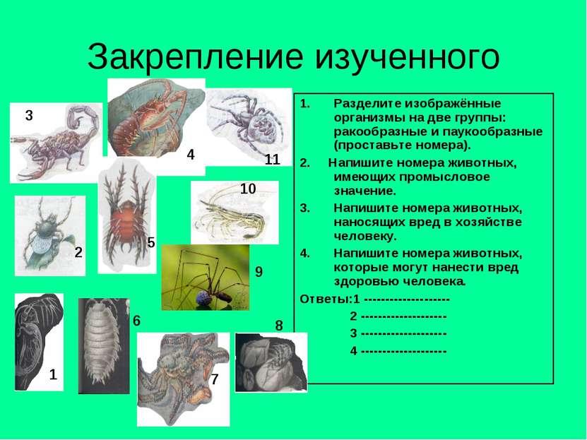 Закрепление изученного Разделите изображённые организмы на две группы: ракооб...