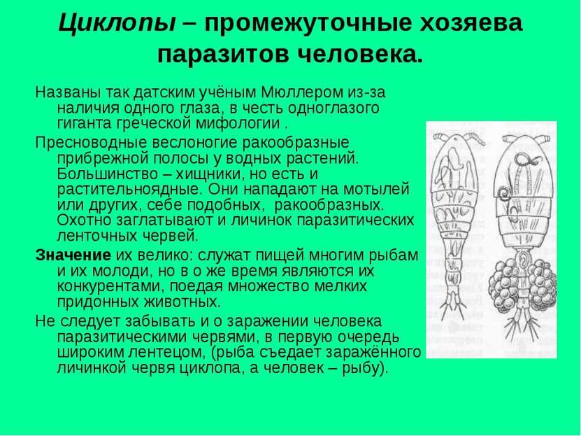 Циклопы – промежуточные хозяева паразитов человека. Названы так датским учёны...