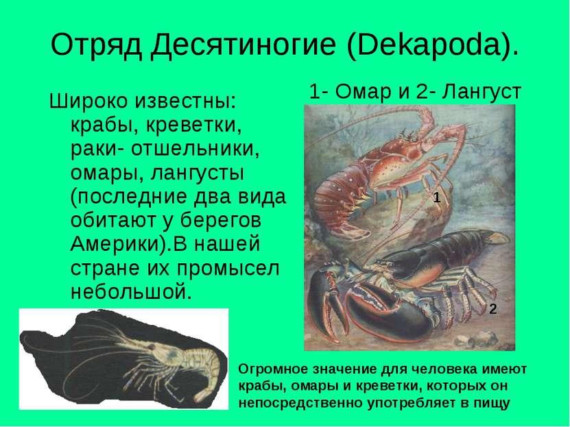 Отряд Десятиногие (Dekapoda). Широко известны: крабы, креветки, раки- отшельн...