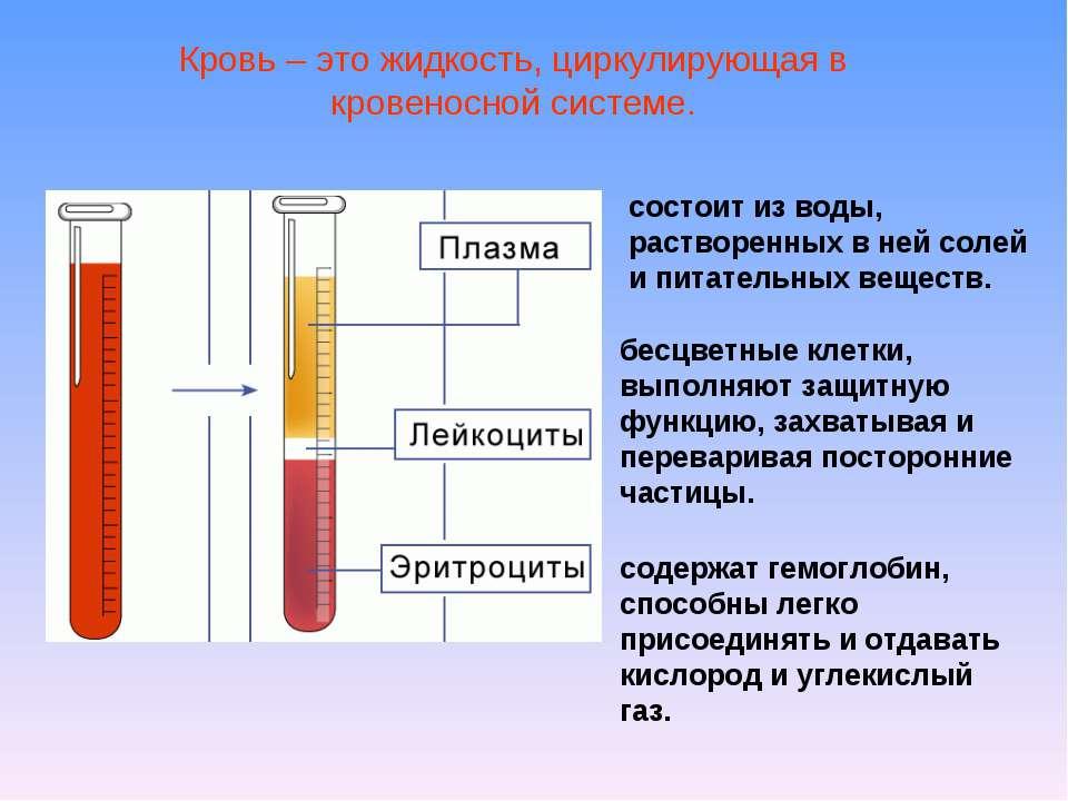 Кровь – это жидкость, циркулирующая в кровеносной системе. состоит из воды, р...