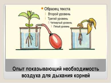Опыт показывающий необходимость воздуха для дыхания корней