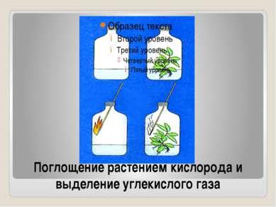Поглощение растением кислорода и выделение углекислого газа