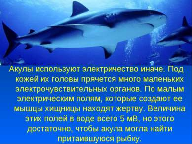 Акулы используют электричество иначе. Под кожей их головы прячется много мале...