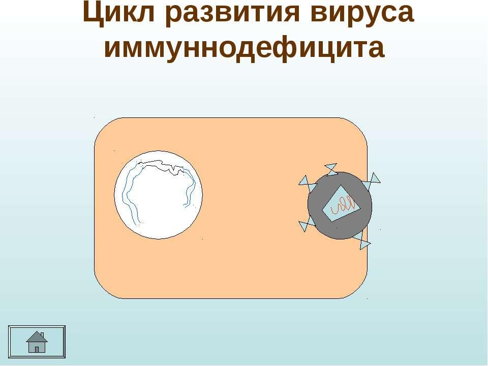 Цикл развития вируса иммуннодефицита