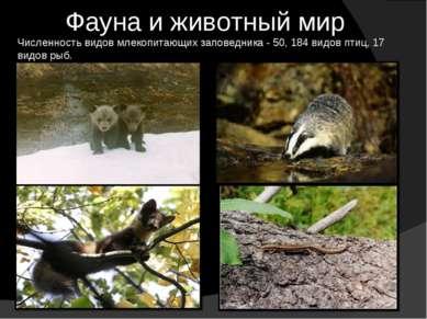 Фауна и животный мир Численность видов млекопитающих заповедника - 50, 184 ви...