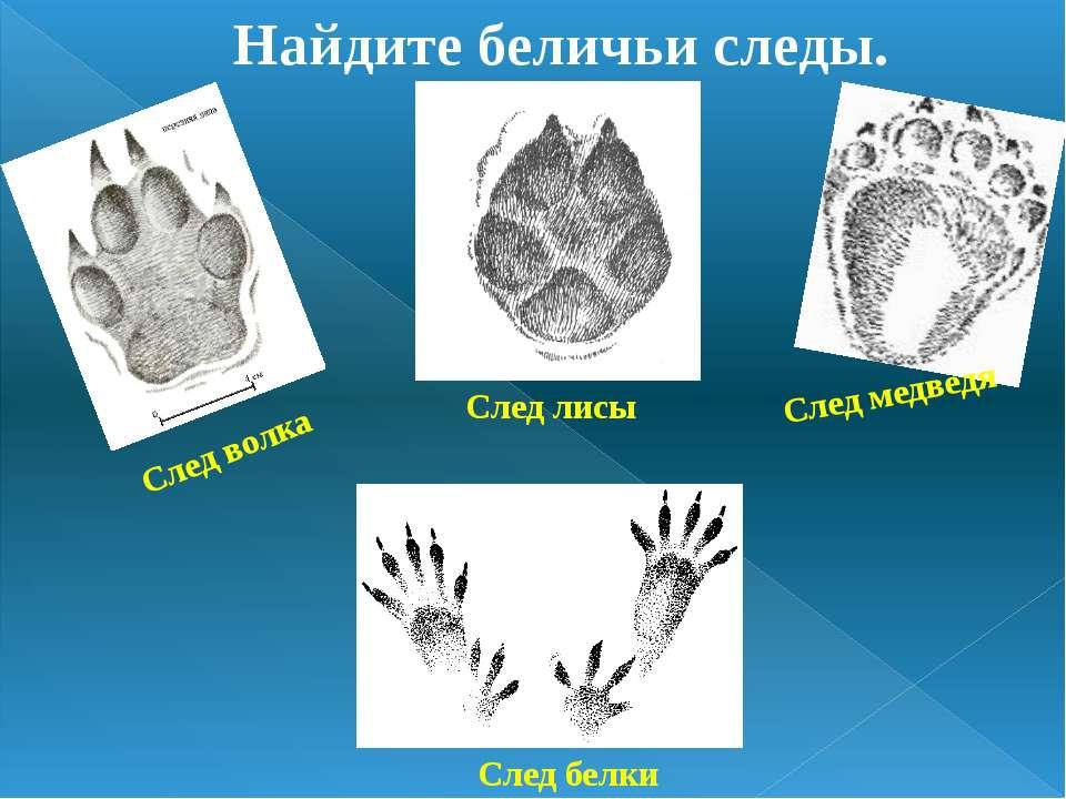 Найдите беличьи следы. След медведя След волка След лисы След белки