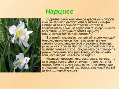 Нарцисс В древнегреческой легенде красивый молодой юноша Нарцисс жестоко отве...