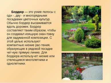Бордюр — это узкие полосы с одн -, дву - и многорядными посадками цветочных к...