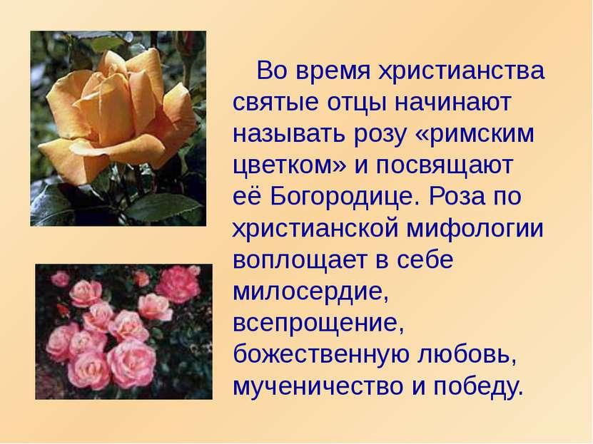 Во время христианства святые отцы начинают называть розу «римским цветком» и ...