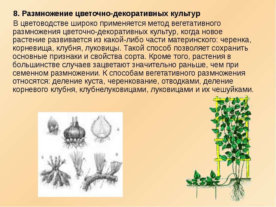8. Размножение цветочно-декоративных культур В цветоводстве широко применяетс...
