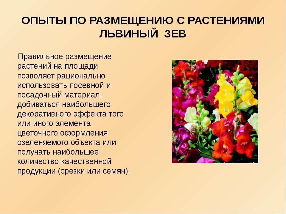 ОПЫТЫ ПО РАЗМЕЩЕНИЮ С РАСТЕНИЯМИ ЛЬВИНЫЙ ЗЕВ Правильное размещение растений н...