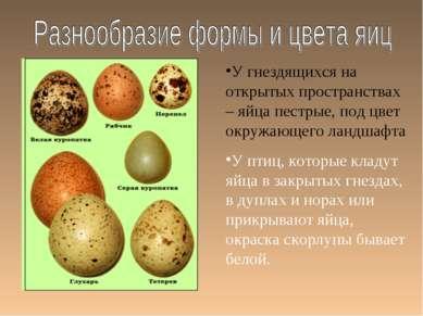 У гнездящихся на открытых пространствах – яйца пестрые, под цвет окружающего ...