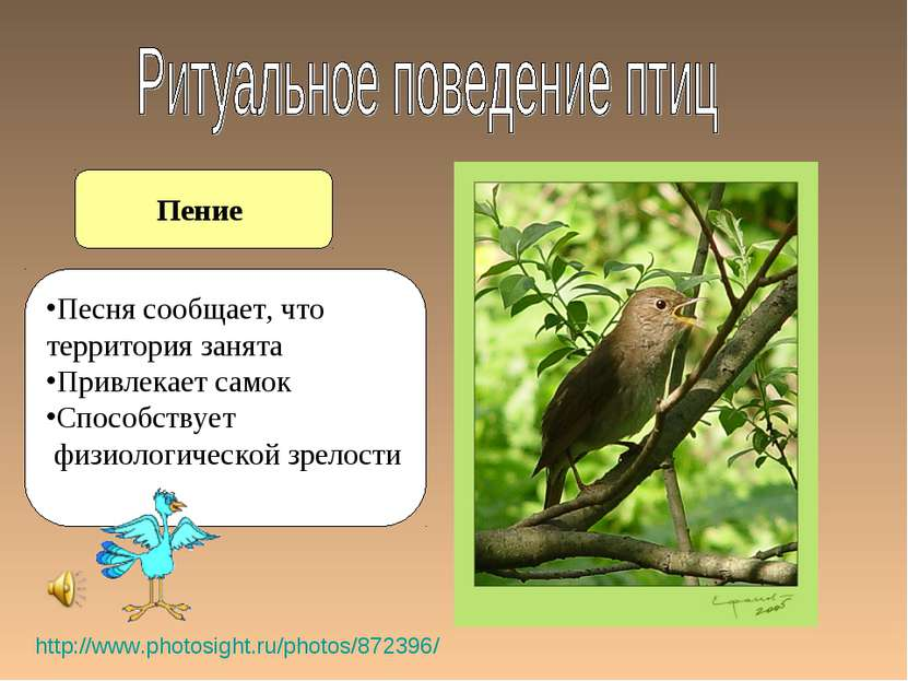Пение http://www.photosight.ru/photos/872396/ Песня сообщает, что территория ...