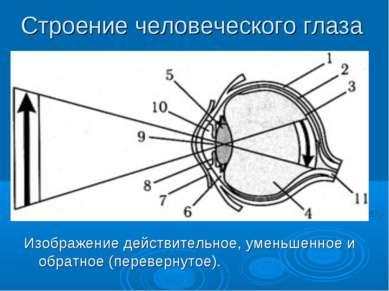 Строение человеческого глаза Изображение действительное, уменьшенное и обратн...