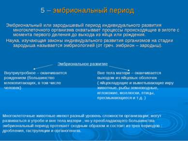 Эмбриональный или зародышевый период индивидуального развития многоклеточного...