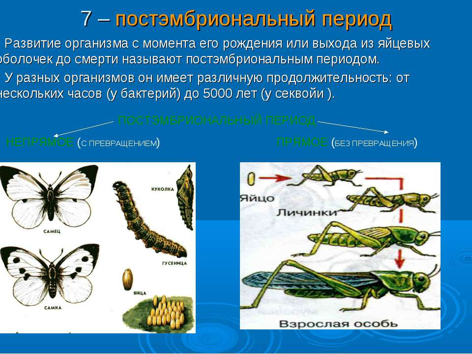 7 – постэмбриональный период Развитие организма с момента его рождения или вы...