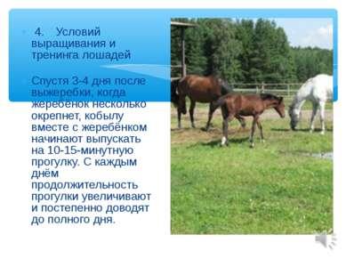 4. Условий выращивания и тренинга лошадей Спустя 3-4 дня после выжеребки, ког...
