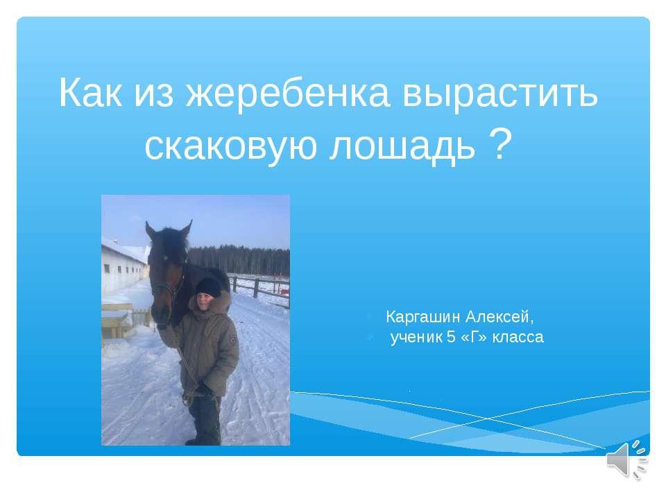 Как из жеребенка вырастить скаковую лошадь ? Каргашин Алексей, ученик 5 «Г» к...
