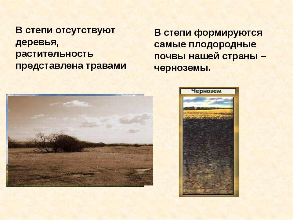 В степи отсутствуют деревья, растительность представлена травами В степи форм...
