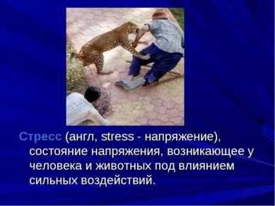 Стресс (англ, stress - напряжение), состояние напряжения, возникающее у челов...