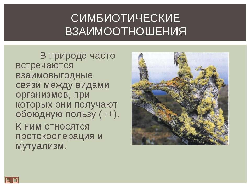 В природе часто встречаются взаимовыгодные связи между видами организмов, при...