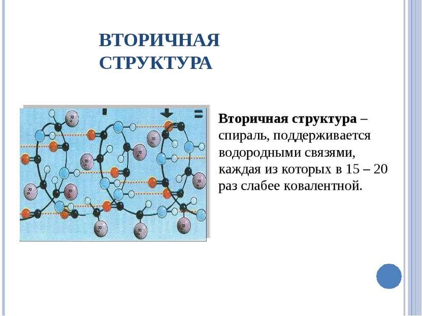 Вторичная структура – спираль, поддерживается водородными связями, каждая из ...