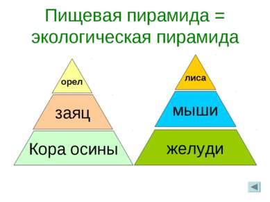 Пищевая пирамида = экологическая пирамида заяц Кора осины орел желуди мыши лиса